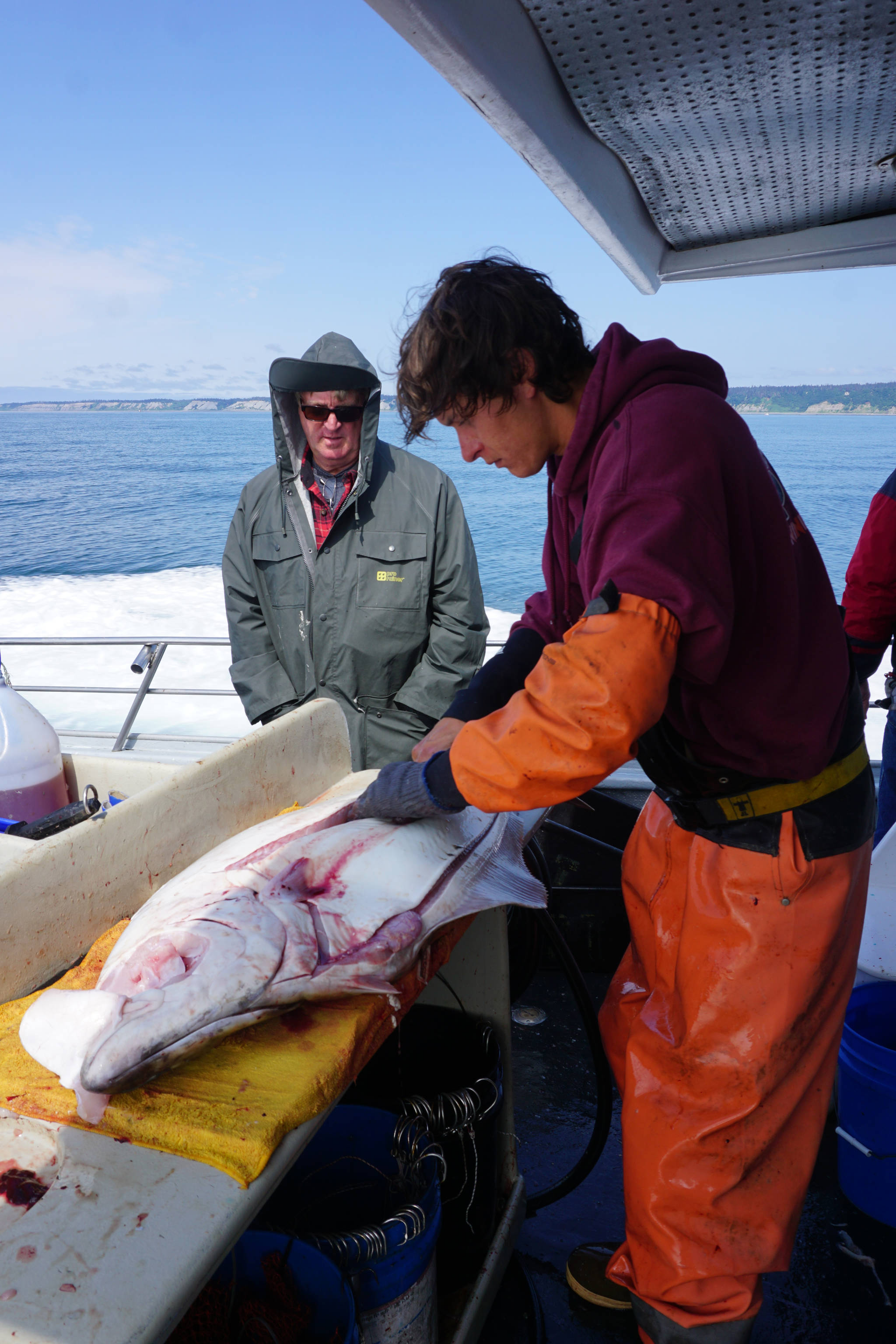 Casey McKinnon fillets a halibut as the Irish returns to Homer from a halibut fishing July 16, 2017 trip in Cook Inlet near Mount Iliamna, Alaska. According to federal regulations, halibut can be filleted on board into four bottom and top pieces as long as the skin is retained and the carcass for a size-restricted fish is kept. Photo by Michael Armstrong/Homer News