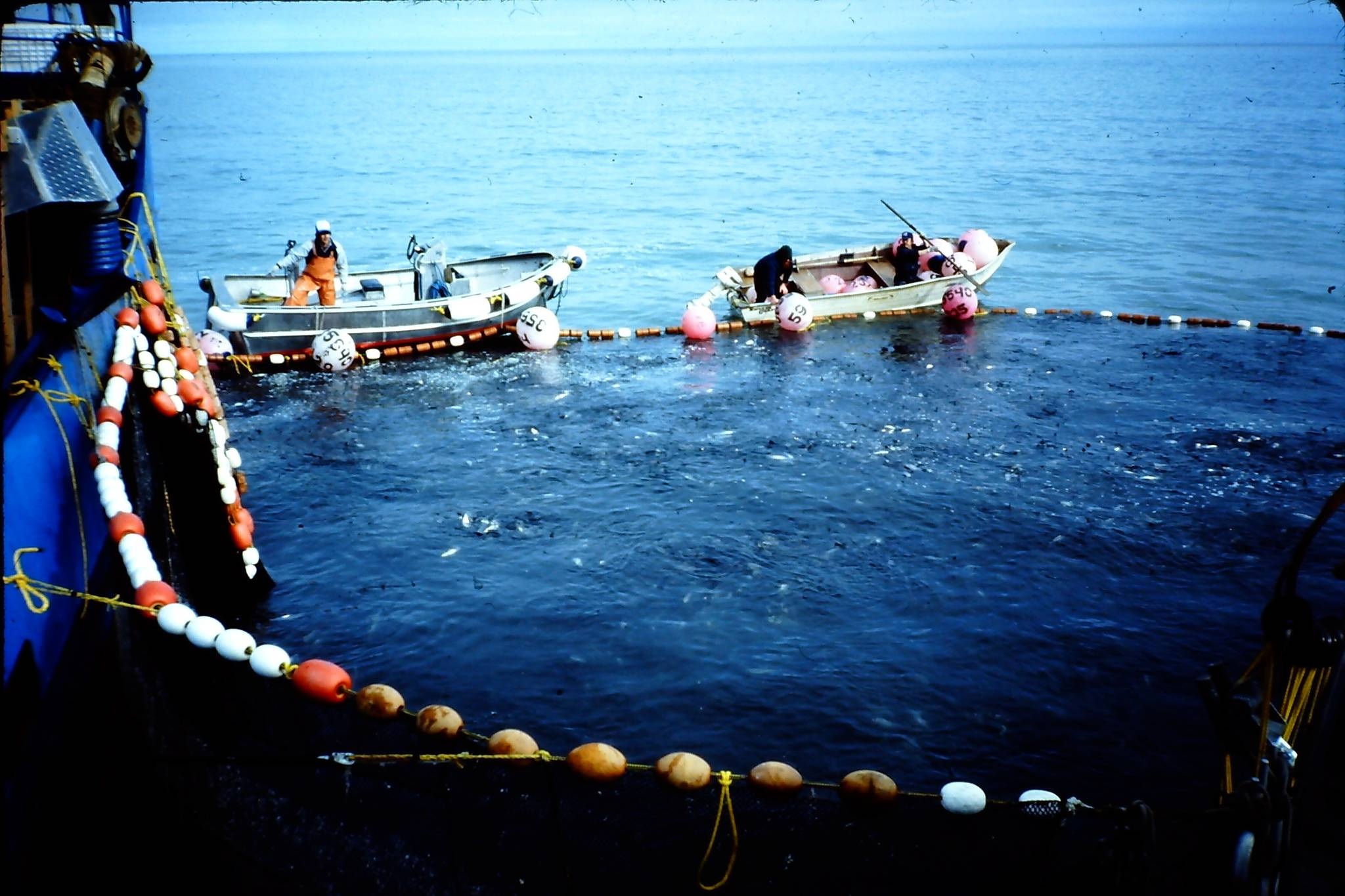 Togiak Sac Roe Herring: Catch the Story Before it's Gone