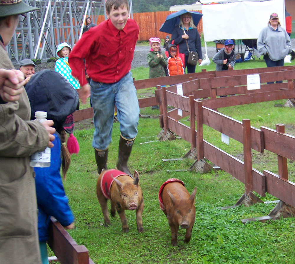 Pig wrangler Robert McGinnis encourages two members of the Kenai Peninsula Racing Pigs team to hurry along to the finish line during the 2013 fair. The pigs are a favorite of fair-goers.-Homer News file photo