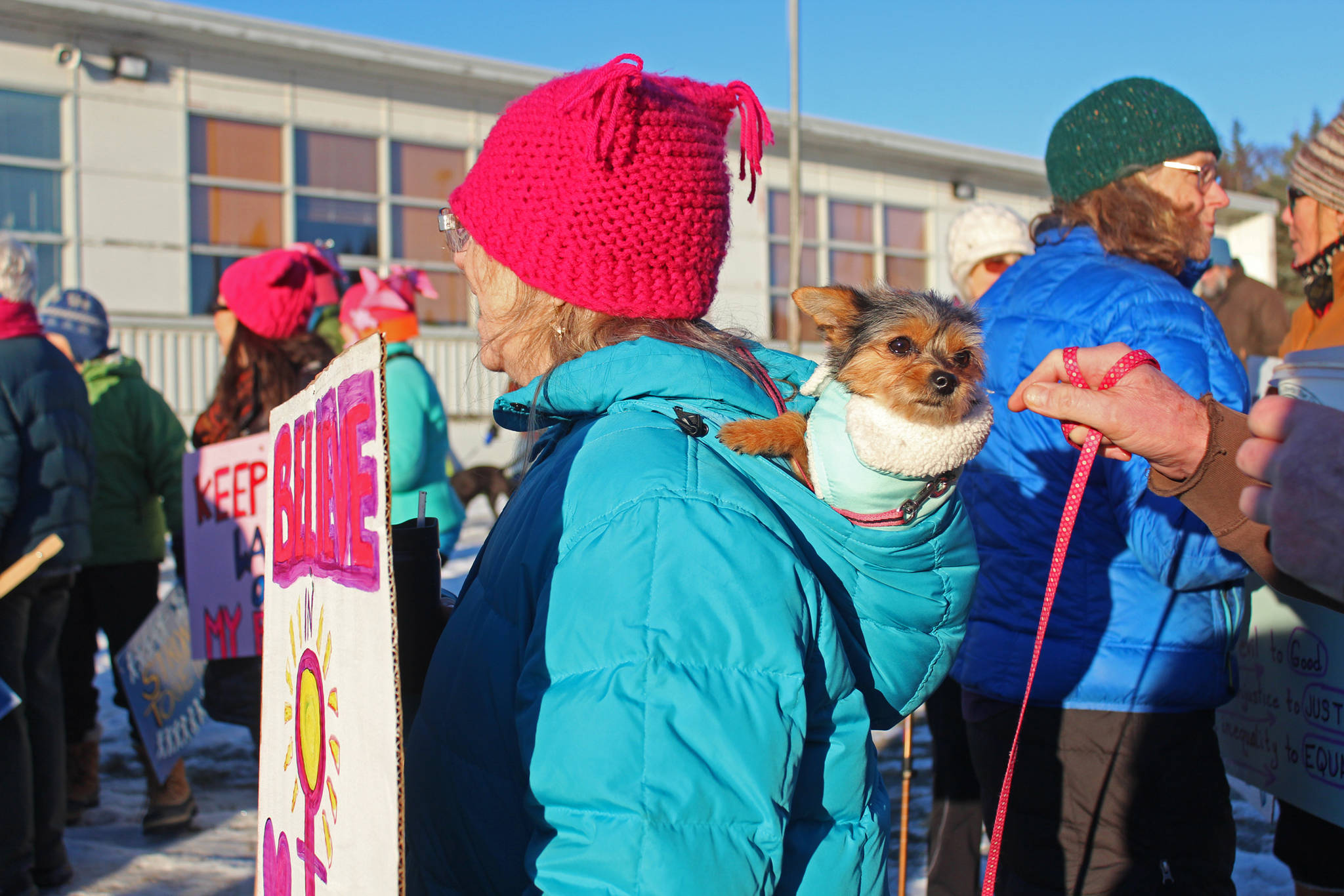 A small dog hitches a ride in the hood of a marcher Saturday, Jan. 19, 2019 at the Homer Education and Recreation Complex in Homer, Alaska, shortly before the Women's March on Homer. (Photo by Megan Pacer/Homer News)