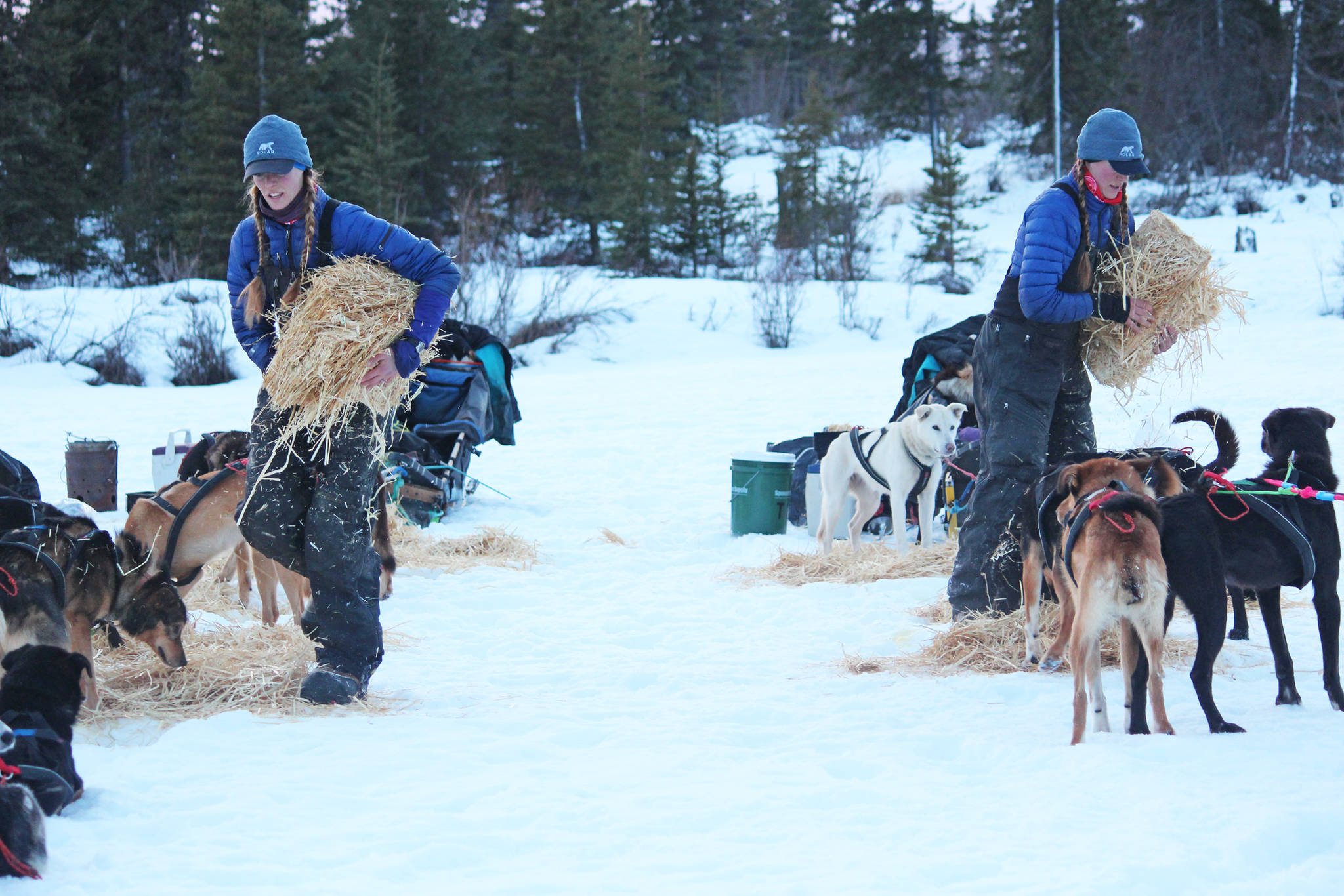 Kristy and Anna Berington lay out hay for their respective dog teams at the first checkpoint of this year's Tustumena 200 Sled Dog Race on Saturday, Jan. 26, 2019 at McNeil Canyon Elementary School near Homer, Alaska. (Photo by Megan Pacer/Homer News)