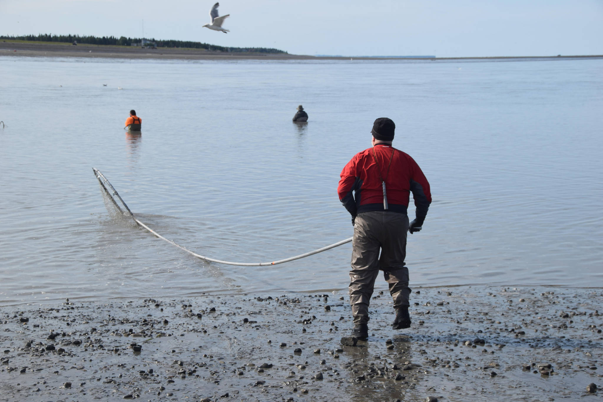 John Hakla from Eagle River heads back into the water while dipnetting on the North Kenai Beach on Wednesday, July 17, 2019. (Photo by Brian Mazurek/Peninsula Clarion)