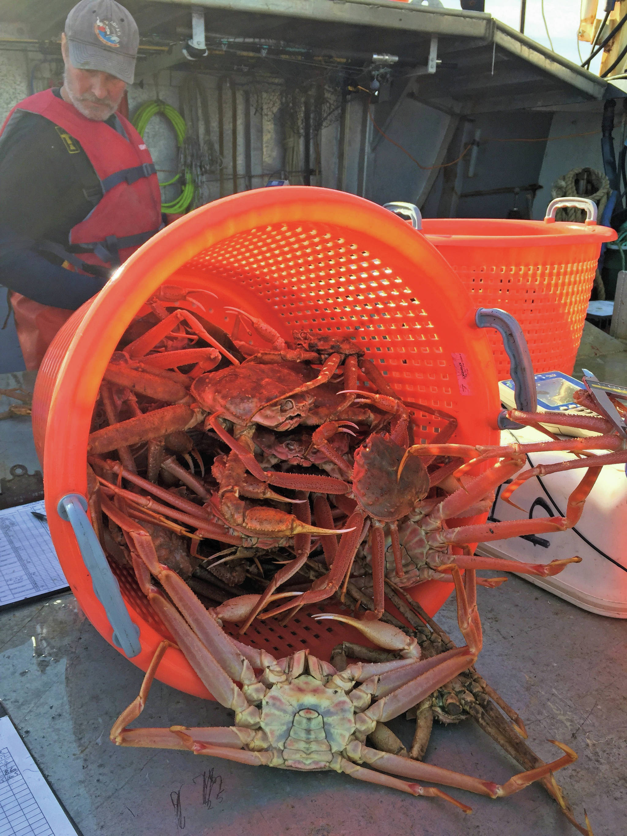 Photo provided                                  A tanner crab trawl survey done by the Alaska Department of Fish and Game in September 2018 assessed crab populations in Kachemak Bay.