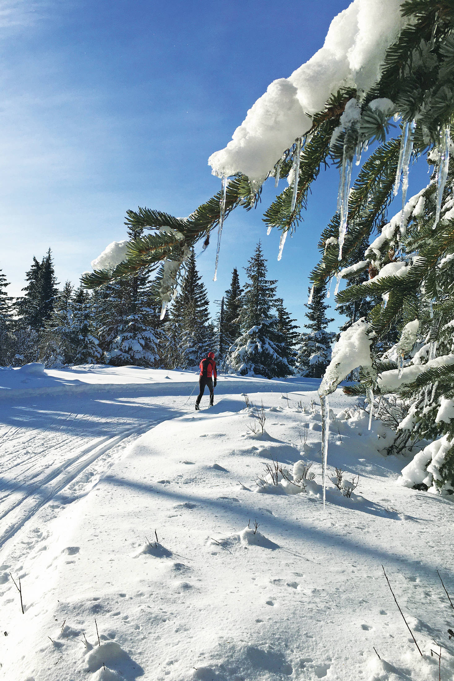 A skier enjoys the trails on the Hayfield Loop at the Lookout Mountain Trails on Monday, Feb. 24, 2020 on Ohlson Mountain Road near Homer, Alaska. (Photo by Megan Pacer/Homer News)
