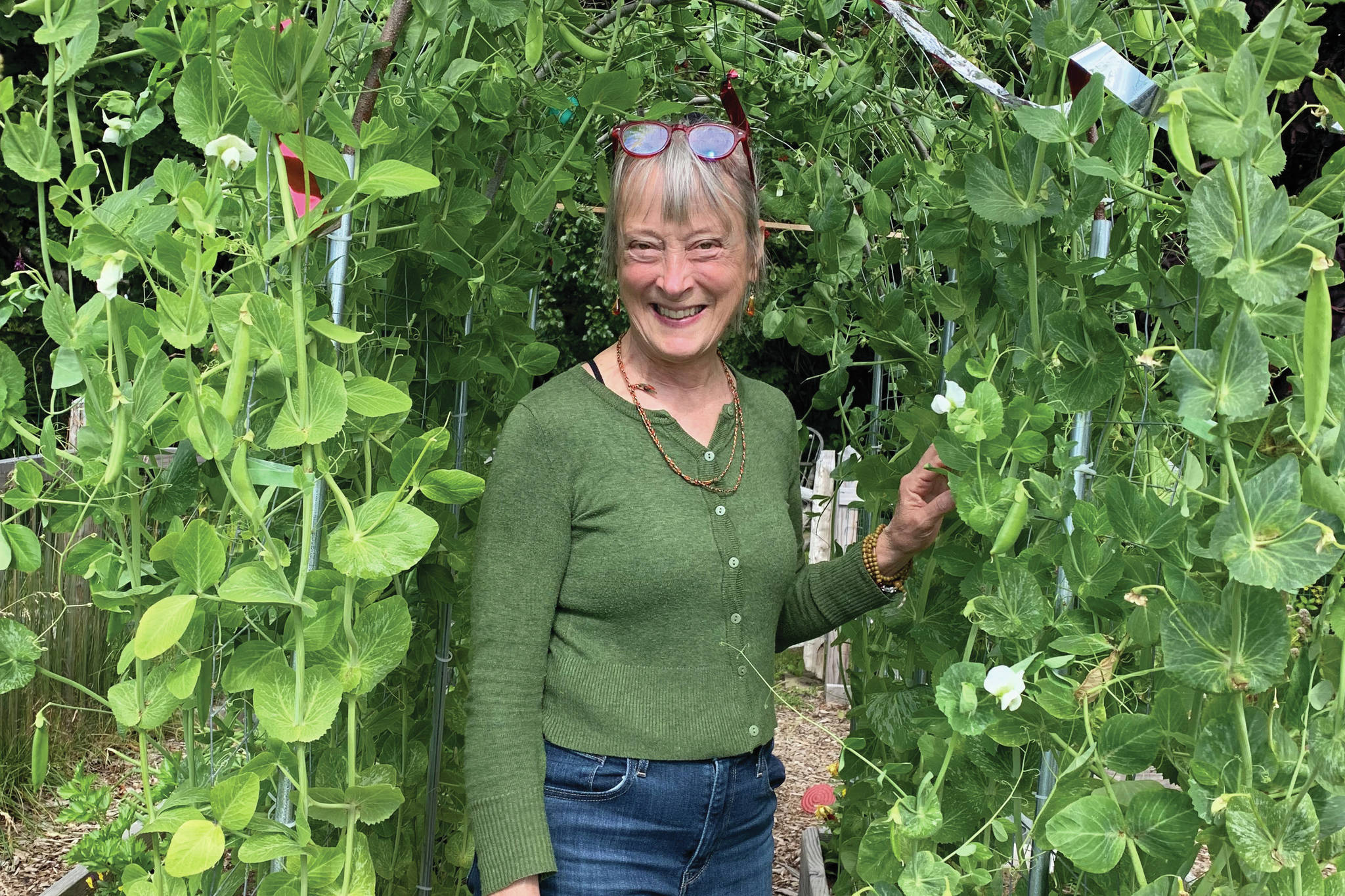Debi Poore stands under her very successful pea tunnel on Aug. 20, 2021, at her home in Homer, Alaska. (Photo by Rosemary Fitzpatrick)