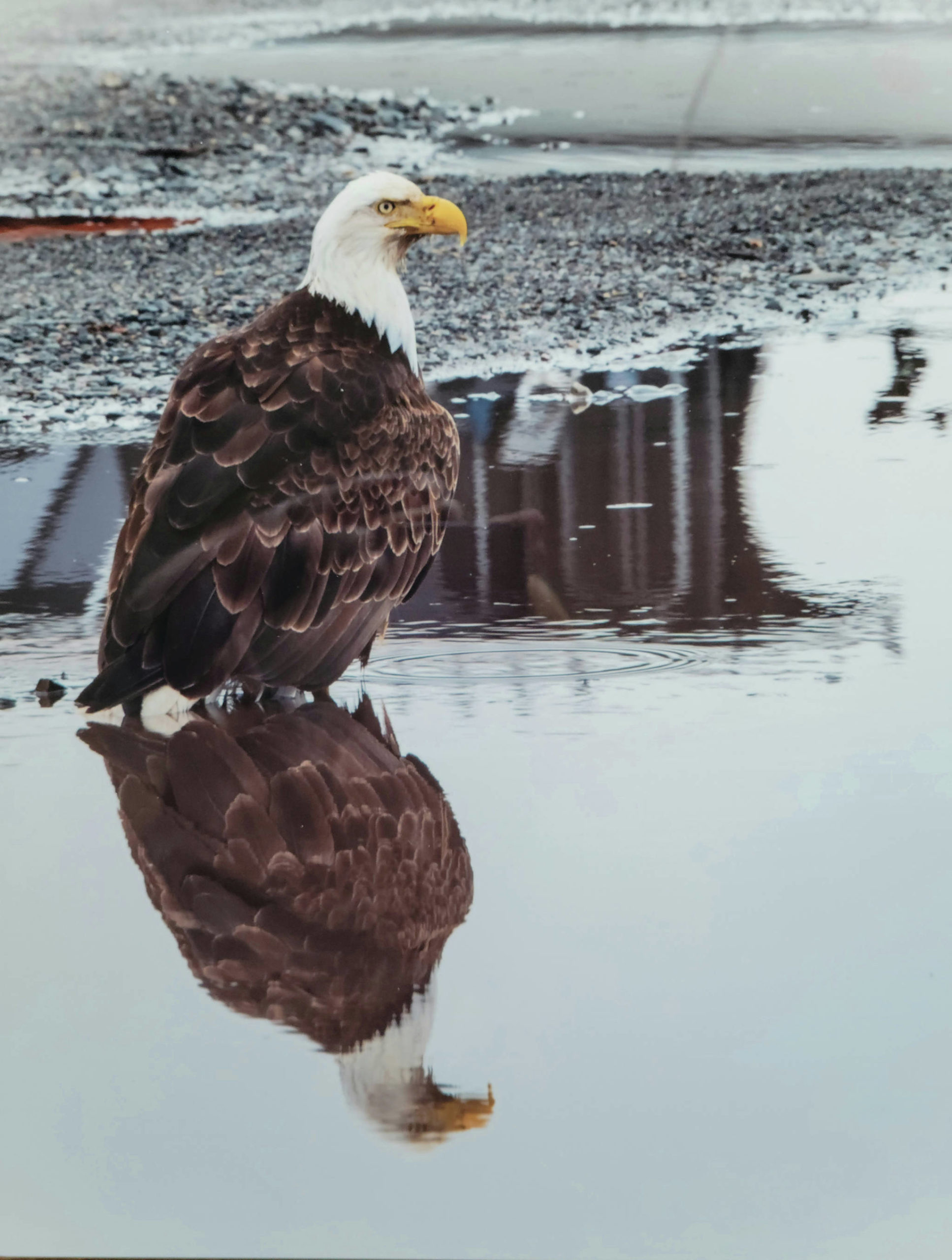 This photograph is part of Lynn Liebers' exhibit opening Friday, Sept. 3, 2021, at Grace Ridge Brewing in Homer, Alaska. (Photo courtesy of Grace Ridge Brewing)