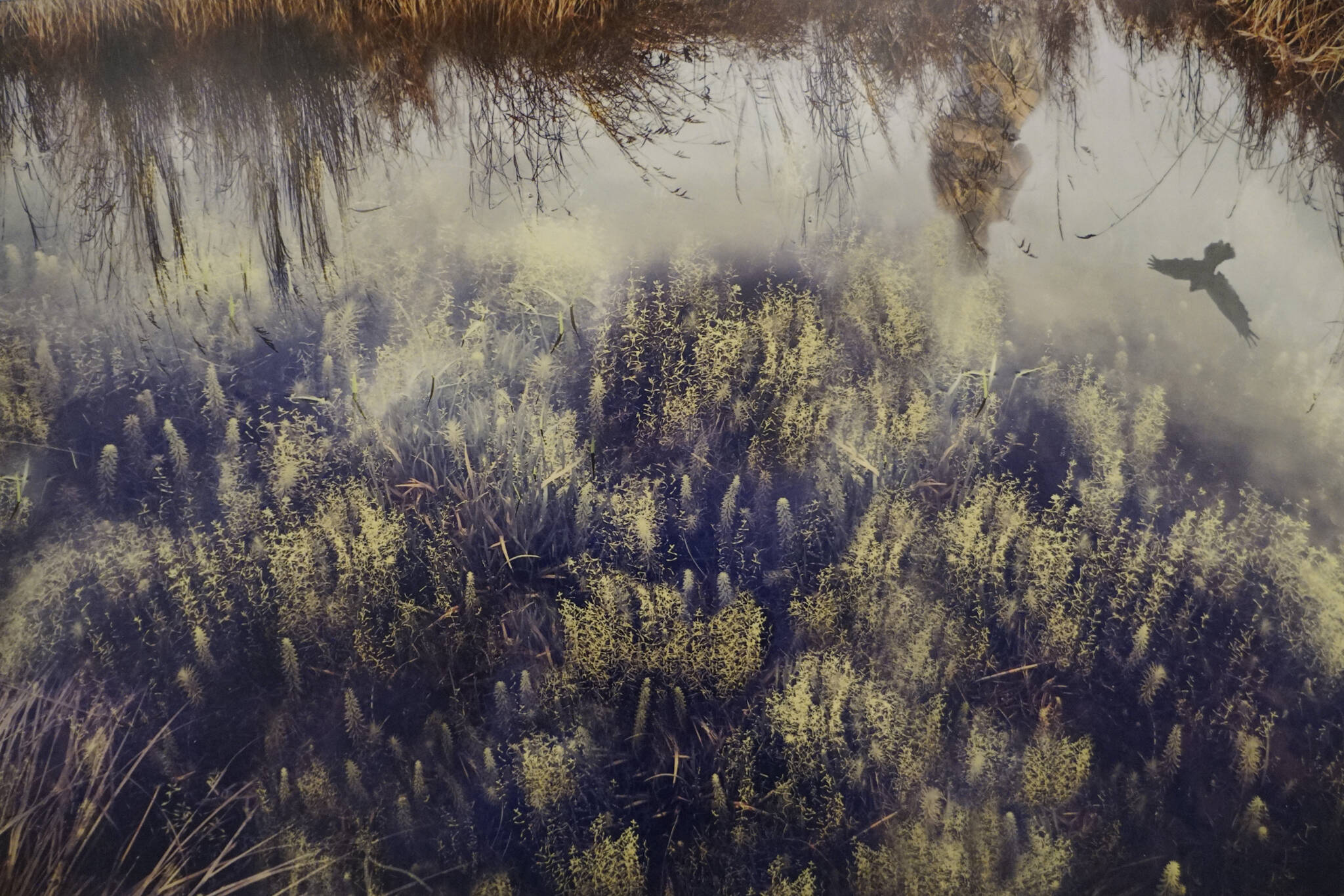 """Kim Terpening's """"Wetands Daydream"""" is part of the Homer Drawdown Peatland exhibit showing at the Pratt Museum & Park through Oct. 10, 2021, in Homer, Alaska. (Photo by Michael Armstrong/Homer News)"""